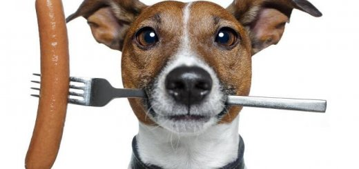 Чем кормить собаку?