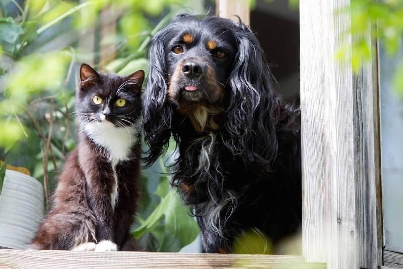 Как ухаживать за домашними животными?