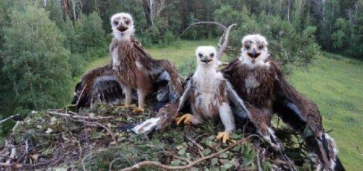 Охрана птиц