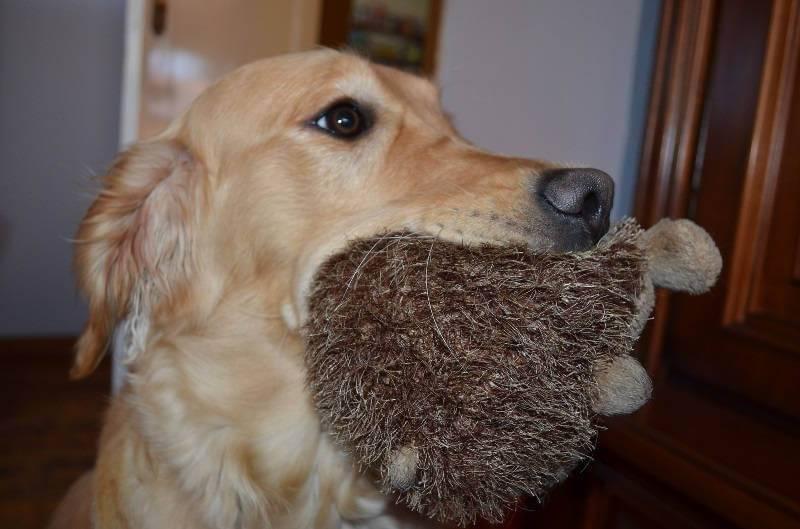Нужна ли собака в доме?