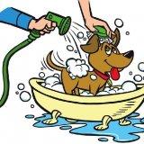 Приобретение и содержание собак