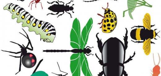 Значение насекомых
