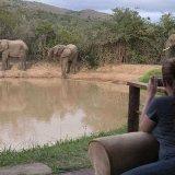 Фотографирование слонов