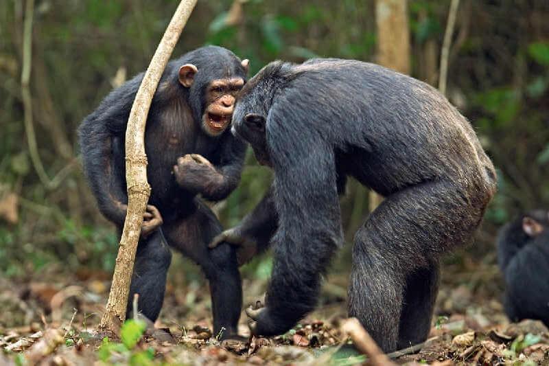Общение животных