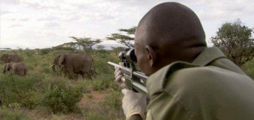 Охотник на слонов