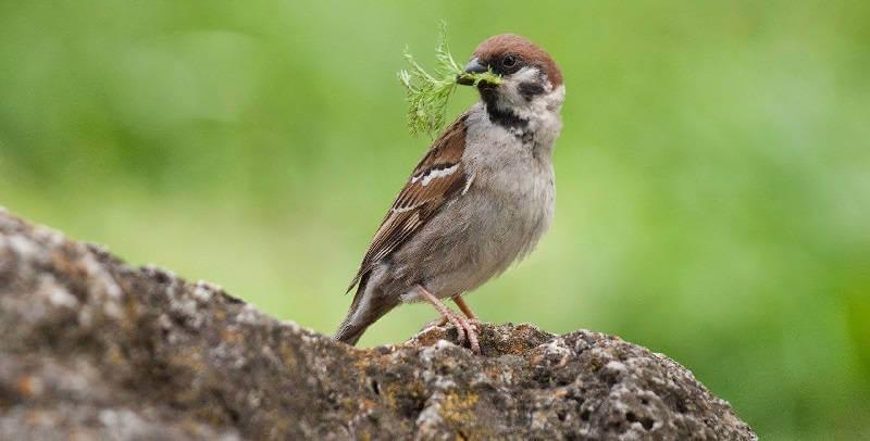 Птицы и травы