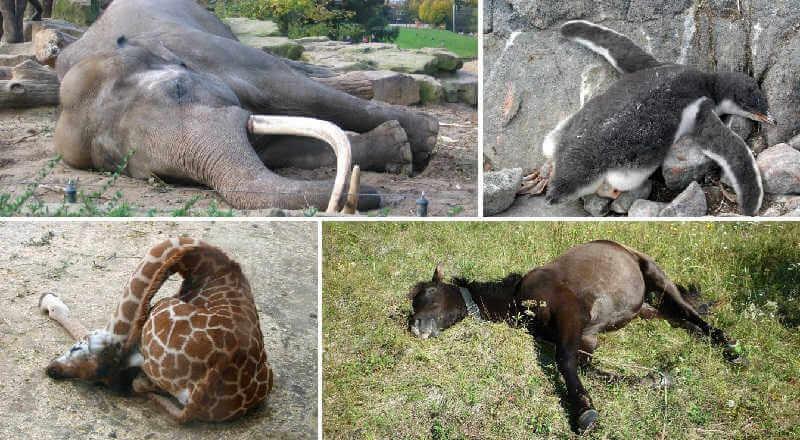 Самоисцеление животных