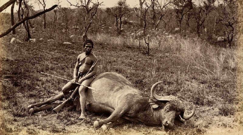 Южноафриканский охотник