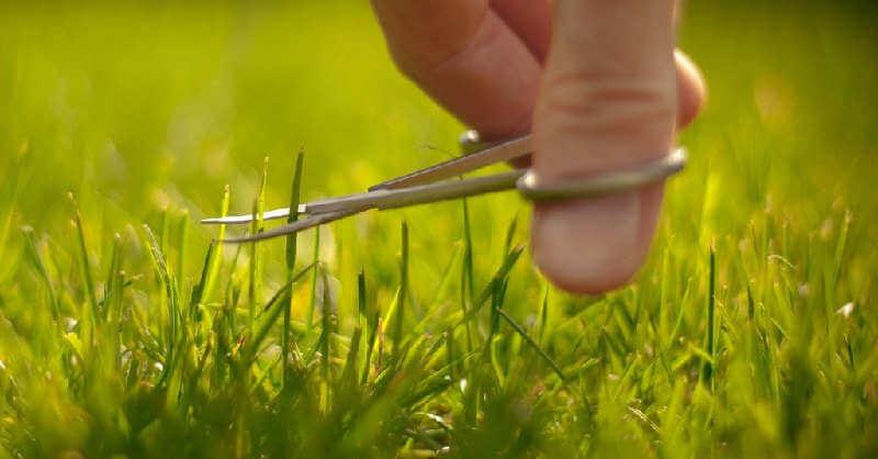 Как привести газон в порядок