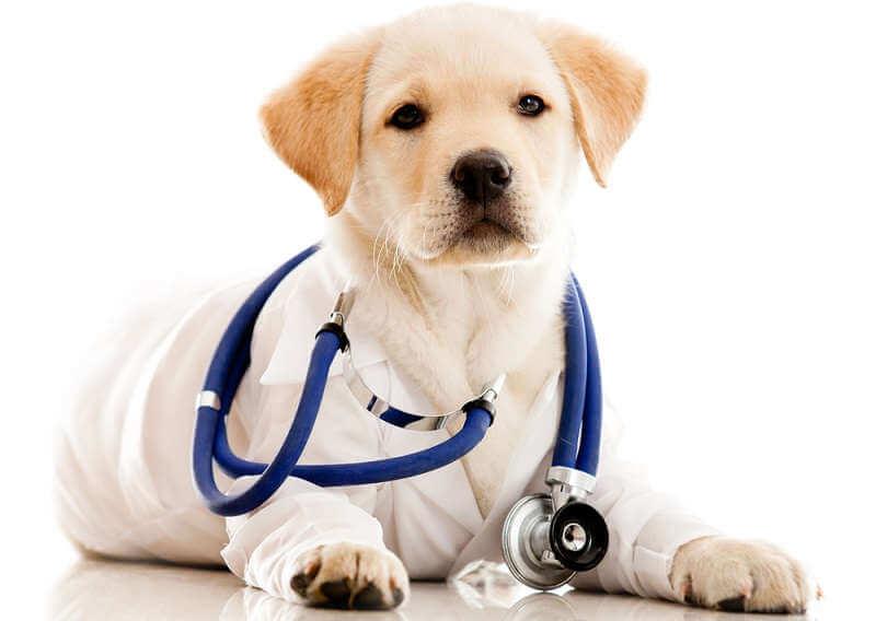 Животные-лекари