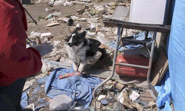 Животные - детекторы землетрясения