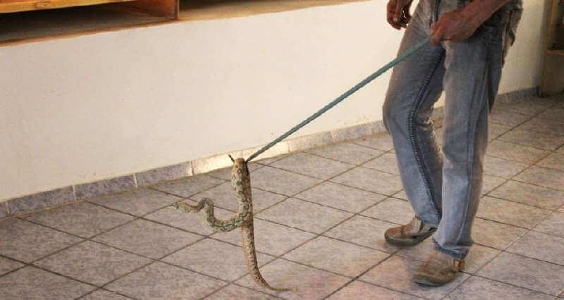 Ловля змей