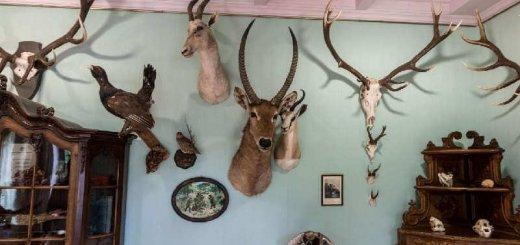 Охотничьи трофеи