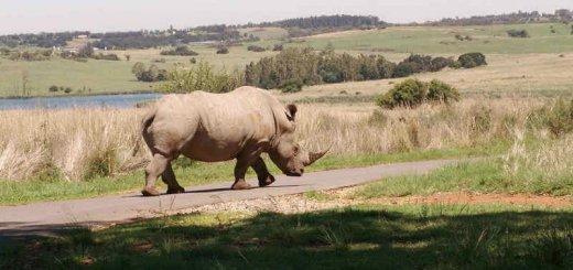 Отлов носорогов в Африке