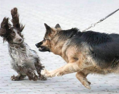 Проблемы в поведении собак