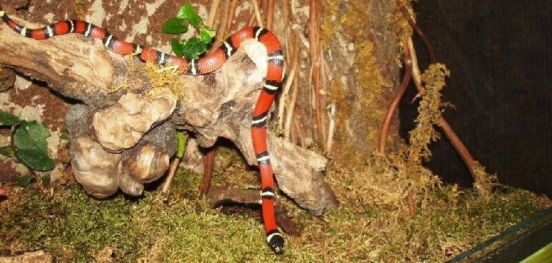 Содержание змей в террариуме
