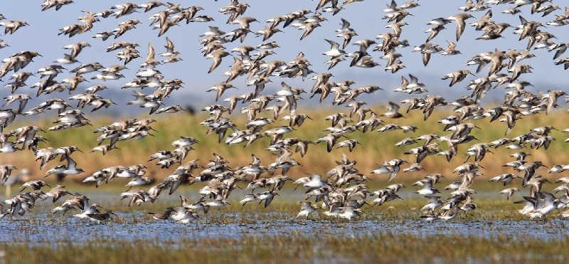 Иррупция птиц