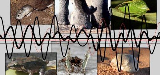 Осязание животных на расстоянии