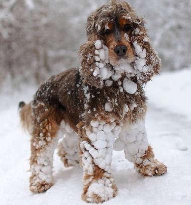 Животные в мороз