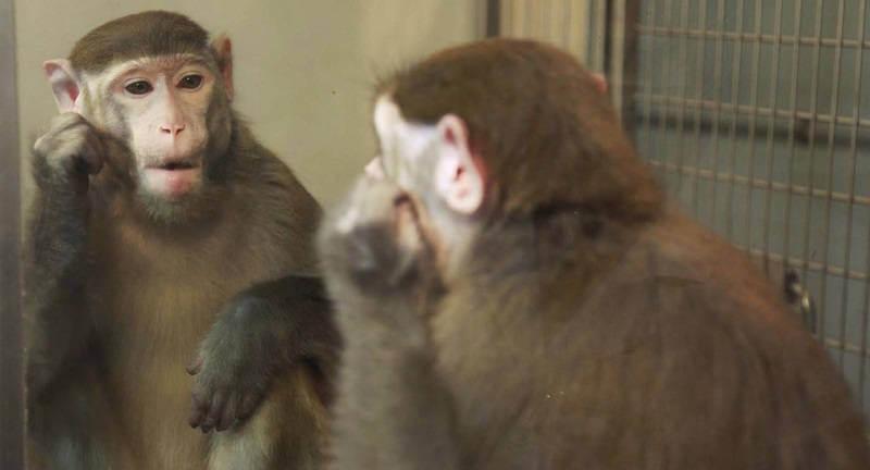 Самоосознание у животных