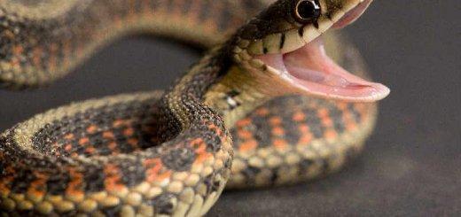 Поведение змей