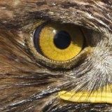 Что видит птичий глаз?