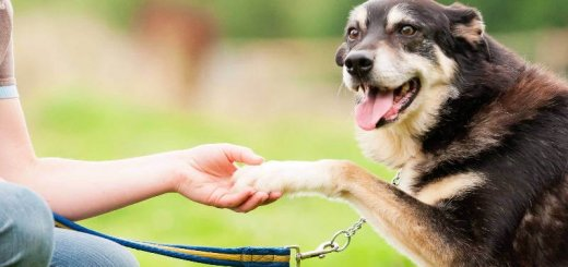 Что собаки говорят нам