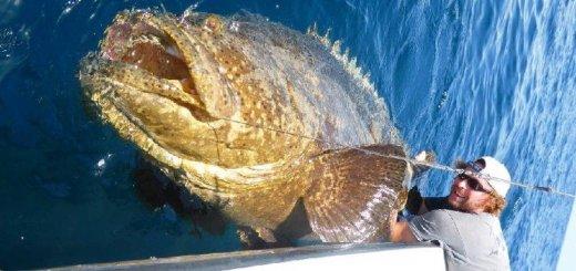 Рыба гарупа