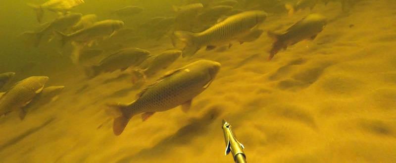 Идеальные условия для подводной охоты