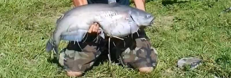 ловля сома с берега на удочку видео