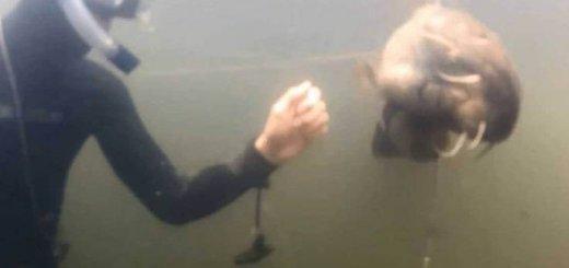 Подводная охота на р. Северский Донец