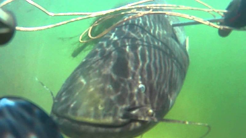 Подводная охота на сома в Челябинской области