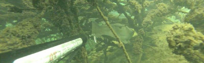 Подводная охота на сома в коряжнике