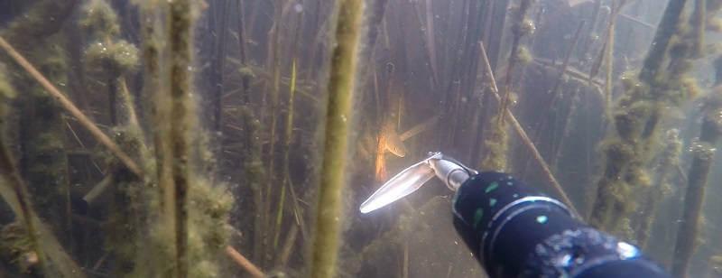 Подводная охота 2014