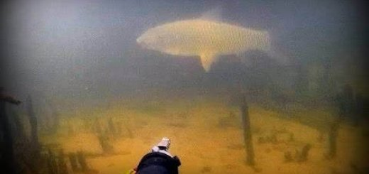 Подводная охота на АЭС