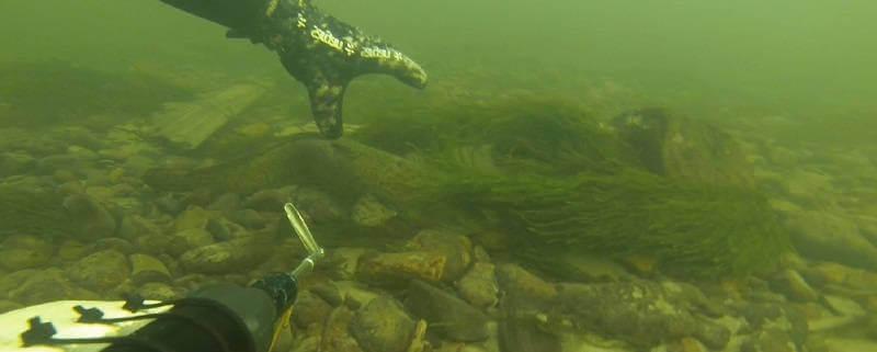 Подводная охота на Енисее зимой