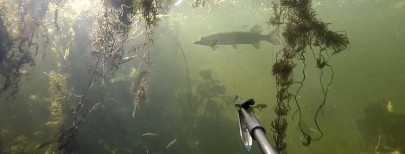Подводная охота GoPro