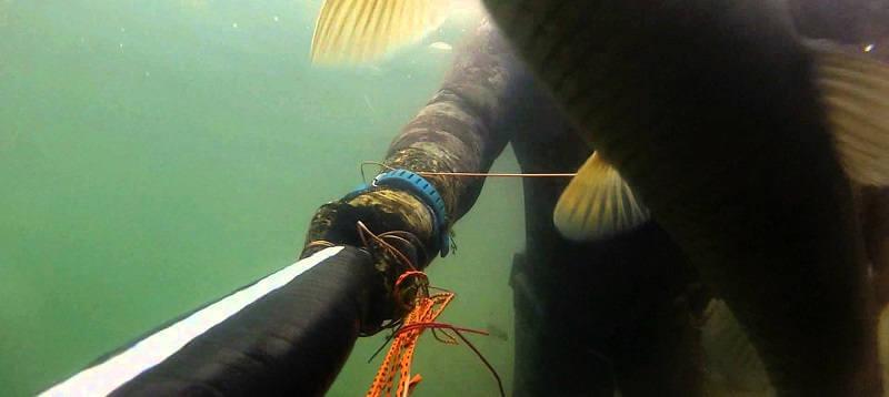 Подводная охота в Хакассии на амура