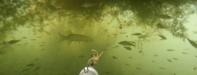 Подводная охота на карповом озере
