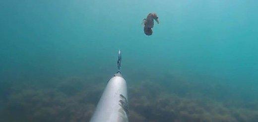 Подводная охота в Черном море