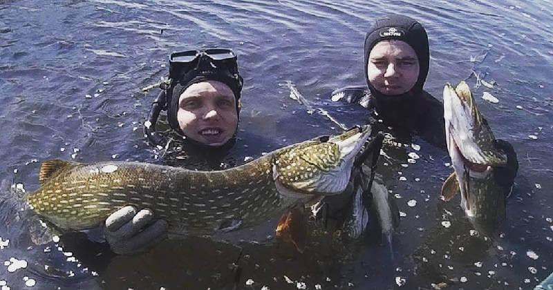 Подводная охота на щуку видео