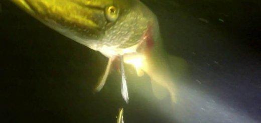 Подводная охота осенью на щуку