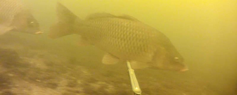 Подводная охота зимой на Днепре