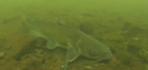 Подводная охота на канале