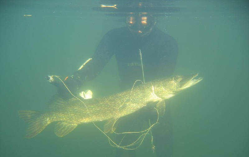 Осень - неплохой период и для подводной охоты на щуку