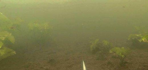 Подводная на толстолобика