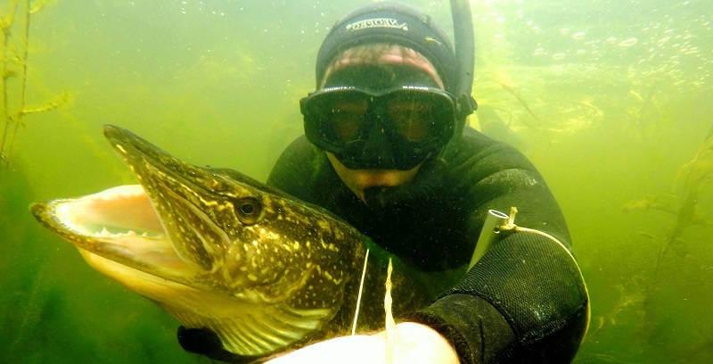 Подводная охота на озере на щуку