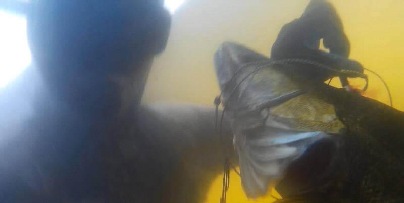Подводная охота на судака и сома
