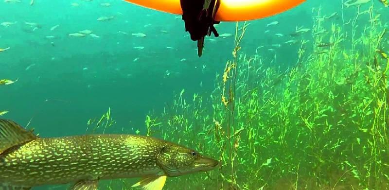 Подводная охота в Туве