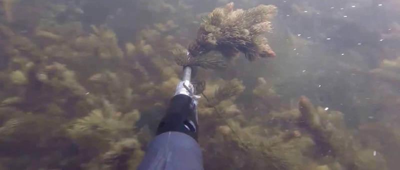 Подводная охота в декабре
